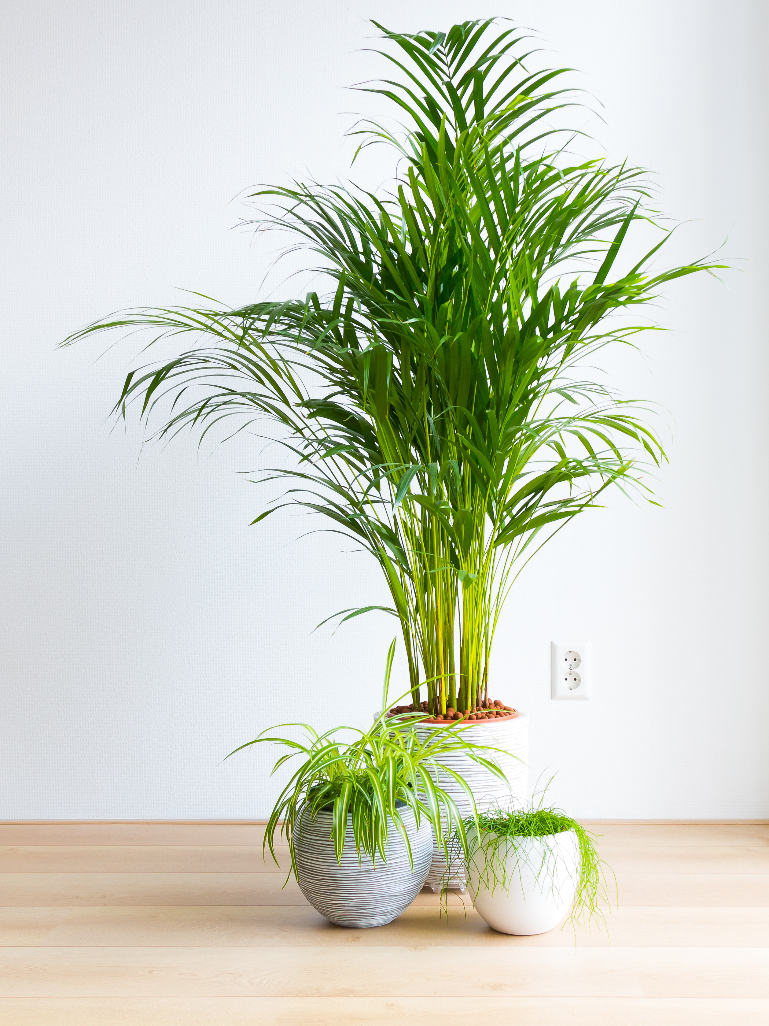 12 Cat Safe Indoor Plants That Filter Air