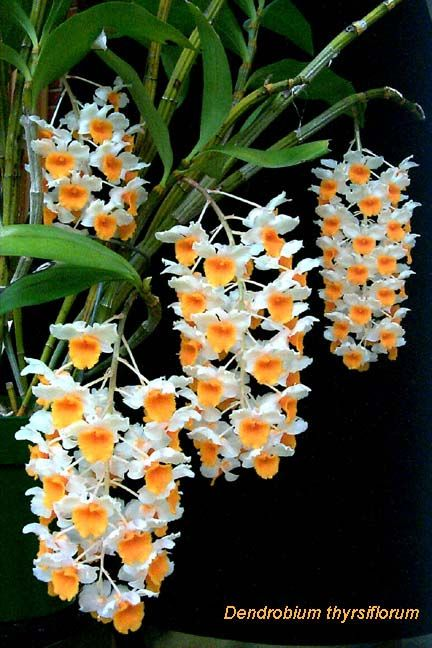 Orchids are GORGEOUS and amazing for cleaning indoor air!