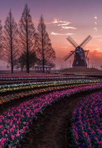 Netherlands Sunset