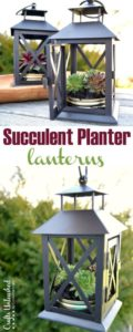 These 19 succulent displays are AMAZING! They are so creative and easy to do!