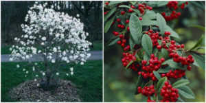 9 Winter Plants and Flowers That Thrive in the Cold