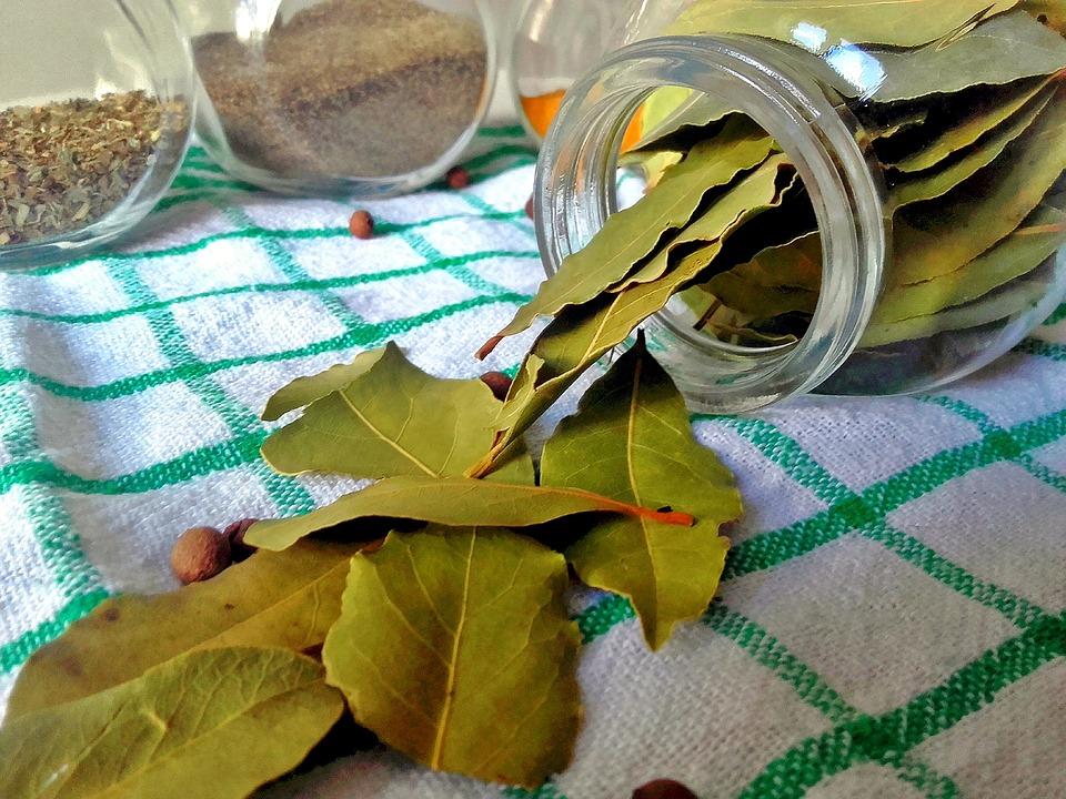 Bay Leaves for Indoor Gardening