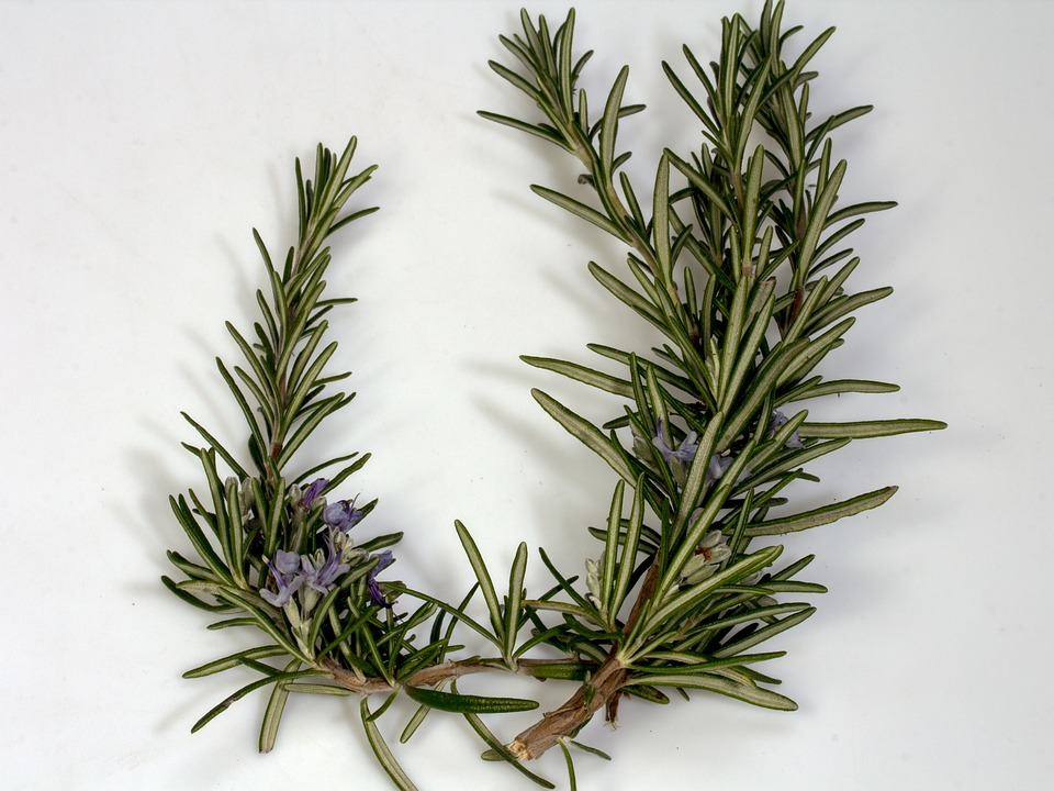 Rosemary Indoor Gardens