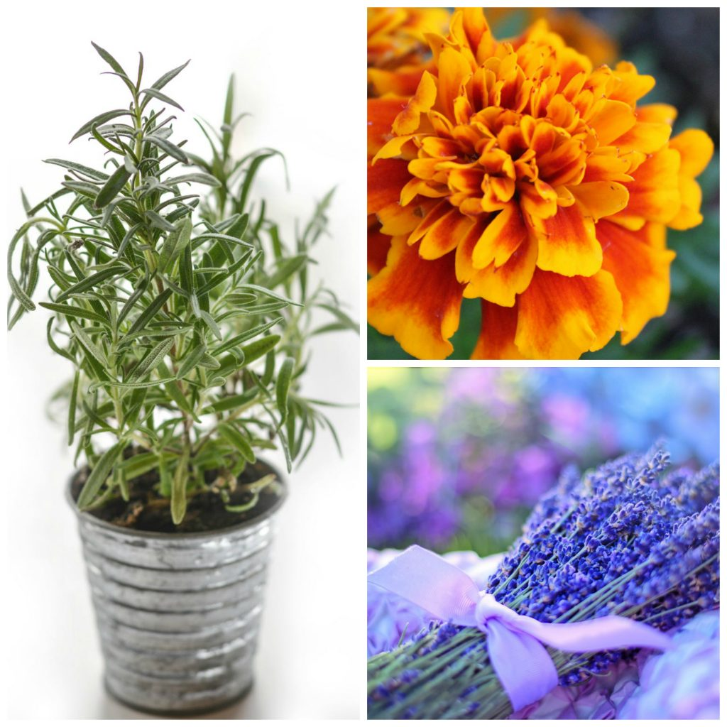 8 Medicinal Plants That Are Great for Growing in Your Kitchen