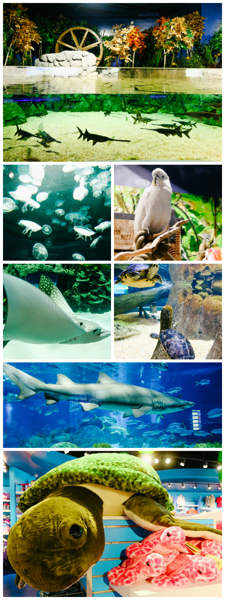 Visiting Arizona: Odysea Aquarium in Scottsdale, AZ