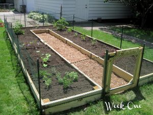 U-Shaped Raised Garden