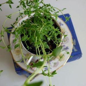 Teacup Indoor Garden