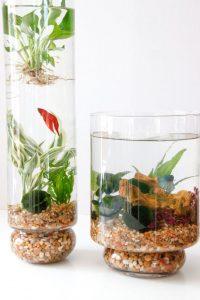 Indoor Water Garden With Fish
