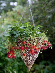 Strawberry Basket Garden