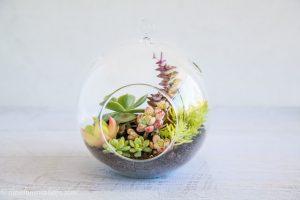 Indoor Garden Terrarium
