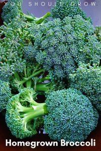 Broccoli Garden