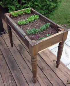 Raised Lettuce Garden DIY