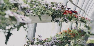 19 Indoor Gardening Ideas