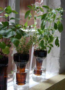 Self Watering Bottle Plants