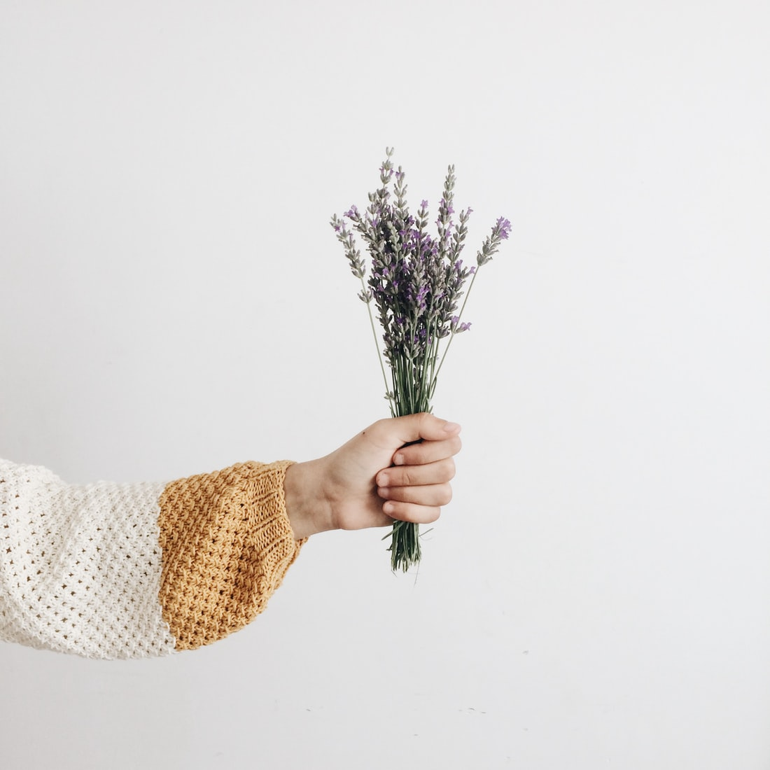 lavender - drought resistant