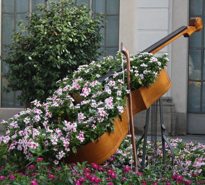 Cello Flower Bed Instrument