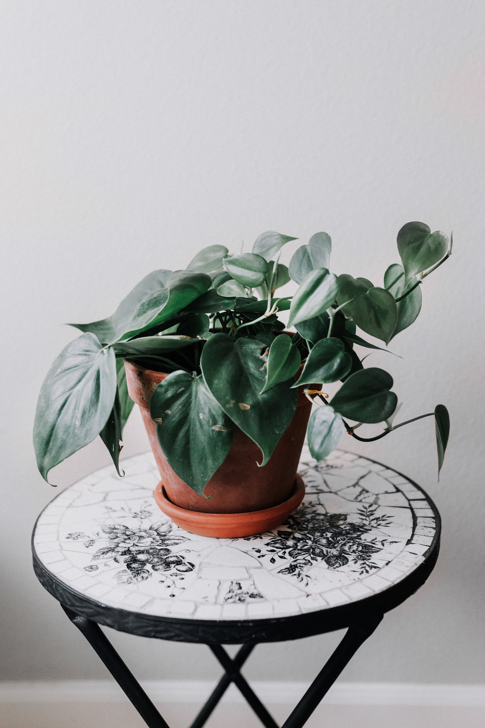 Heartleaf Philodendron Hanging Plant