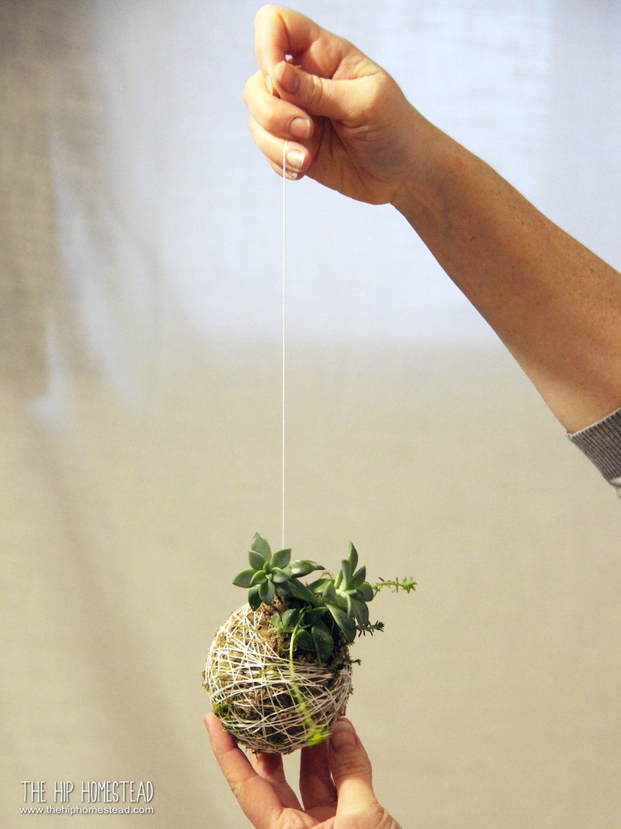 Succulents in twine