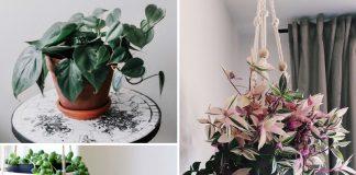 Hanging Plants DIYs