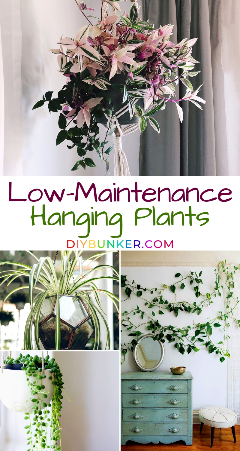 10 Indoor Hanging Plants That're Low Maintenance