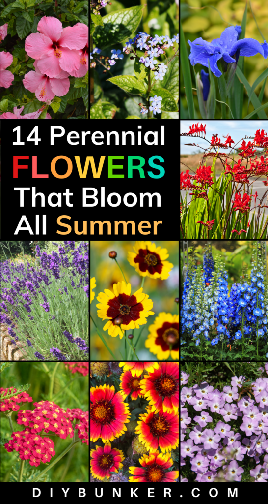 14 Perennial Flowers That Bloom All Summer Long