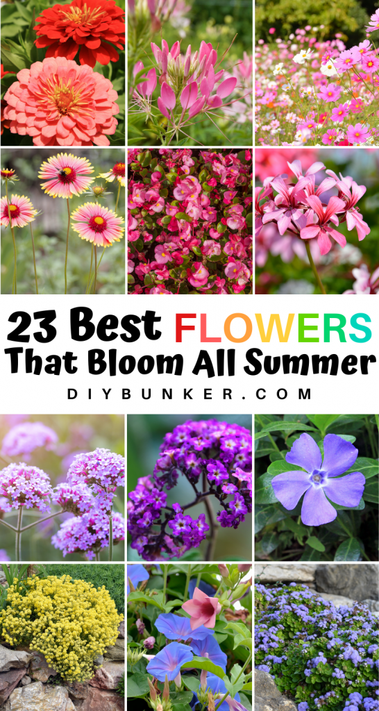 23 Annual Flowers That Bloom All Summer