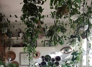 Indoor Hanging Plants Guide