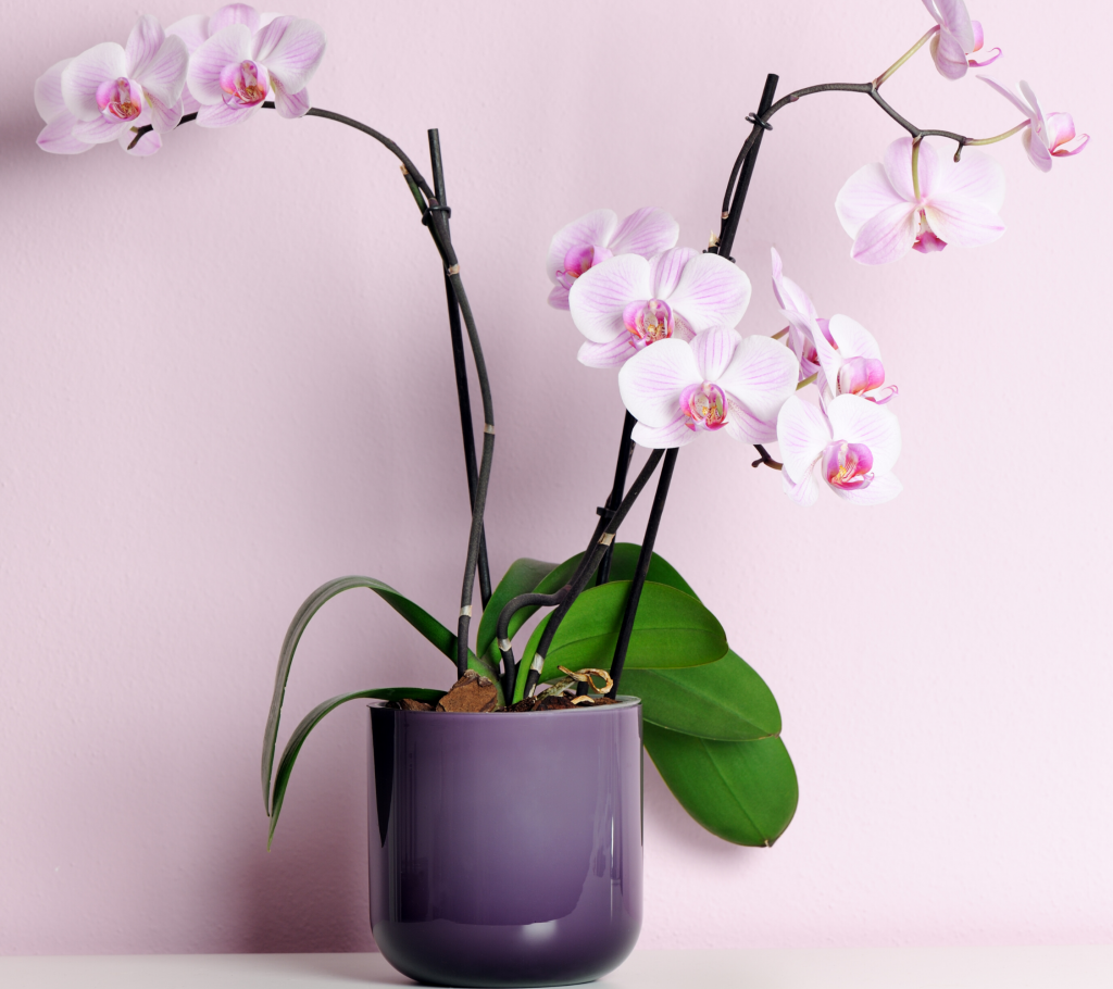 Indoor Hanging Plants Guide - Orchid