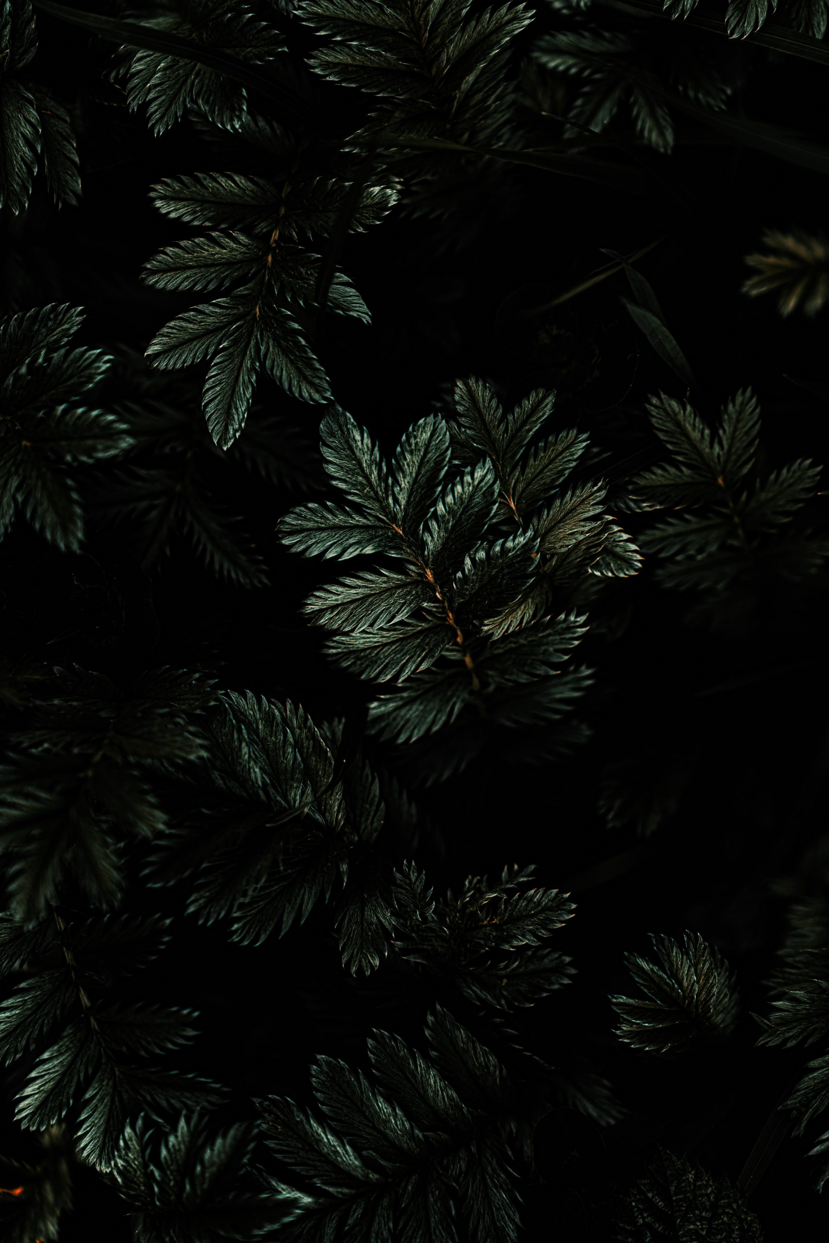 60 Aesthetic Dark Wallpapers for iPhone | Looking for the perfect moody black wallpaper for your iPhone? Here are the best black HD backgrounds you can download FOR FREE! Be warned, you just may fall in love with all of these dark backgrounds!