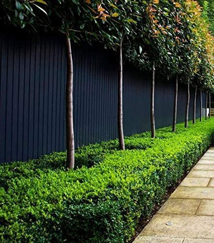 The Best Paint For Wood Fence