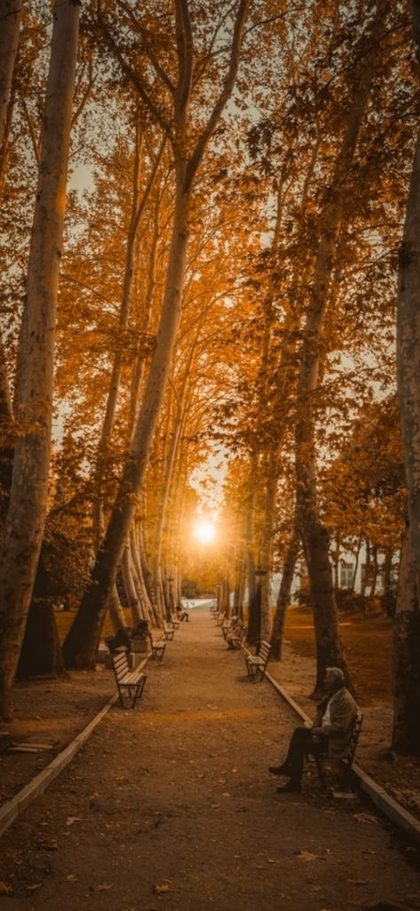 50 HD Fall Wallpapers for iPhone