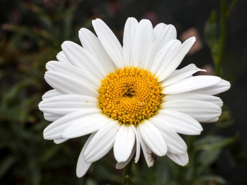 22 Gorgeous Perennial Fall Flowers for Your Garden